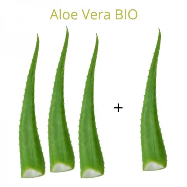 Βιολογικά Φύλλα Αλόης 3ΚΙΛΑ+1 ΚΙΛΟ ΔΩΡΟ